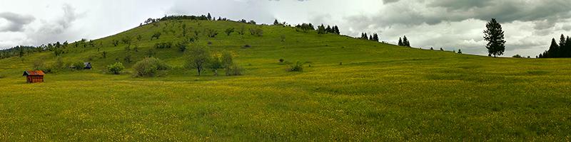Leefgebied Bremvlinder - Colias myrmidone